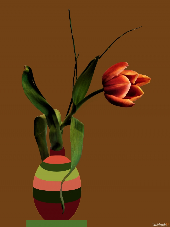 Florerende tulp