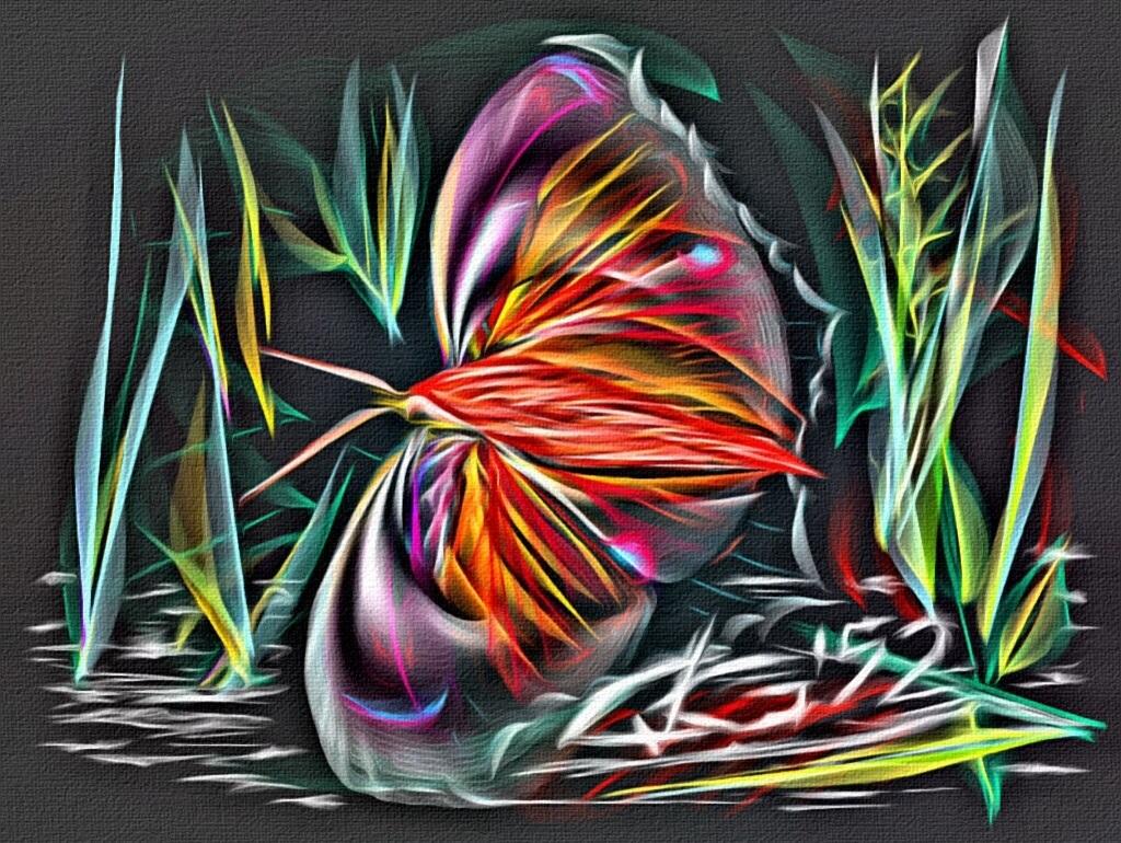 Nachtvlinder 40 x 60